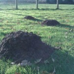 huge mole hills in garden