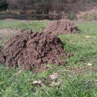 mole pest control service